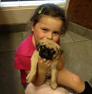 Past Chinese Pug Puppy